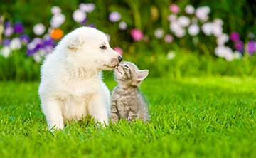A puppy and kitten kissing, symbolising gaining clients.